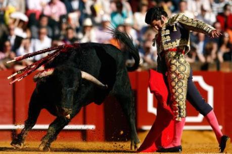 Vụ trâu chọi Đồ Sơn nhìn lại lễ hội đấu bò tót ở Tây Ban Nha
