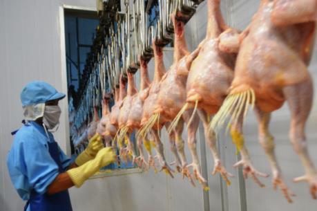 Bước ngoặt của ngành chăn nuôi