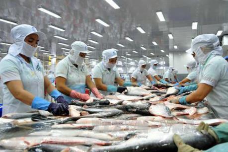 Xuất khẩu cá tra sang Mỹ liên tục gặp khó