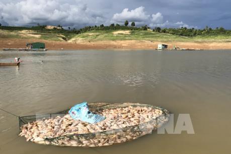 Bộ Công Thương: Cá chết ở Kon Tum không liên quan đến hoạt động của thủy điện