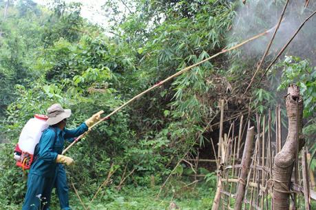 Ứng phó dịch châu chấu tre lưng vàng ở Điện Biên