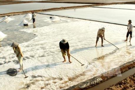 Diêm dân Bà Rịa-Vũng Tàu thu hoạch vụ muối đầu năm