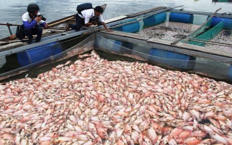 Tìm nguyên nhân cá chết hàng loạt trên sông Cổ Cò, Đà Nẵng