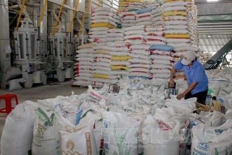 Xuất khẩu gạo Việt Nam sang Malaysia tăng đột biến
