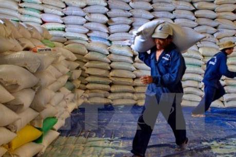 Vì sao xuất khẩu gạo của Việt Nam khởi sắc?