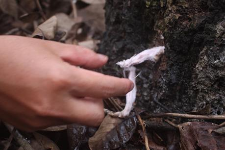 Công an vào cuộc điều tra hàng trăm cây gỗ quý bị đầu độc bằng thuốc diệt cỏ tại Đồng Nai