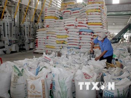 Philippines mở thầu nhập khẩu 250.000 tấn gạo: Doanh nghiệp Việt Nam có tiếp cận?