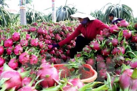 Giá một số loại trái cây đang tăng mạnh