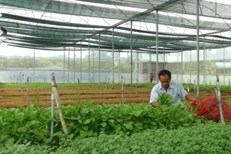 Khó tiếp cận nguồn vốn nông nghiệp công nghệ cao: Đâu là rào cản?