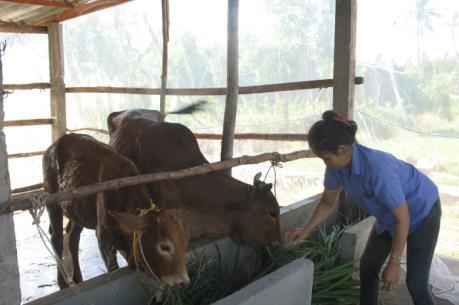 Nghệ An xây dựng mô hình chăn nuôi bò cho các hộ di dân
