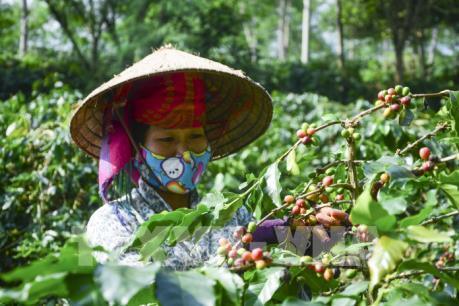 Chiến lược phát triển ngành cà phê: Tăng chế biến sâu để nâng cao giá trị