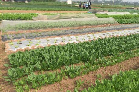 Cần những hỗ trợ gì để nông nghiệp hữu cơ phát triển?