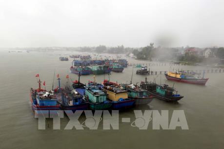 Khánh Hòa sắp xếp chỗ neo đậu cho tàu cá trong mùa mưa bão