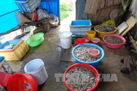 Xử phạt nhiều cơ sở vi phạm an toàn vệ sinh thực phẩm