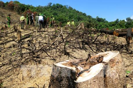 Cận cảnh hiện trường 43 ha rừng tự nhiên ở Bình Định bị xóa sổ