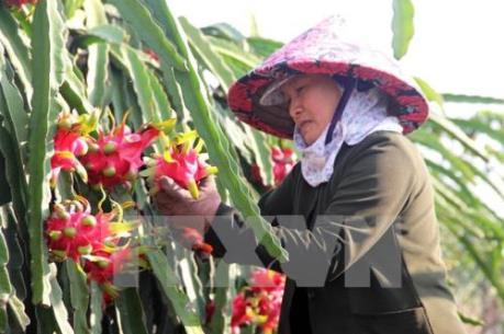 Chất lượng và thương hiệu quyết định nông sản Việt vươn ra thế giới