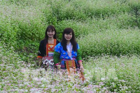 Lên đỉnh đèo Pha Đin ngắm hoa tam giác mạch