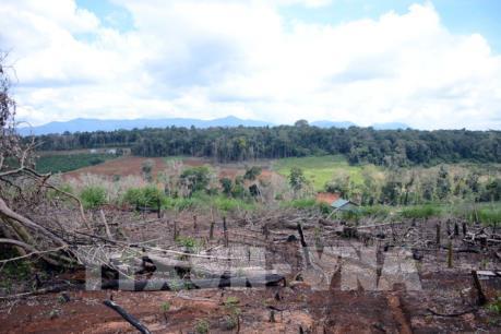 Vụ mất 53ha rừng tại Đắk Nông: Thanh tra toàn diện và xử lý nghiêm sai phạm