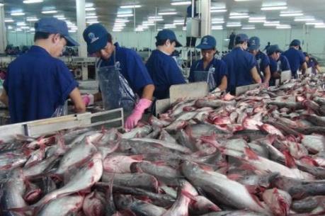 Bứt phá cho xuất khẩu cá tra - Bài 1: Lần đầu vượt mốc 2 tỷ USD