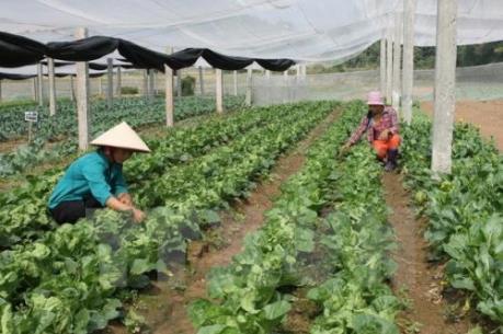 Sẽ có nhiều hỗ trợ việc liên kết sản xuất, tiêu thụ sản phẩm nông nghiệp