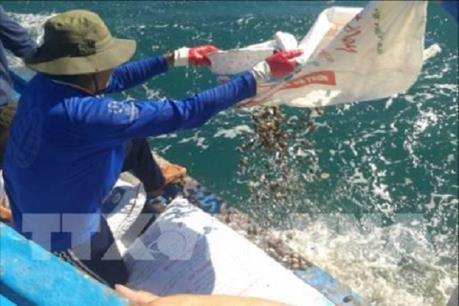 Đã xác định nguyên nhân hải sản chết bất thường tại khu vực biển Tuy Phong, Bình Thuận