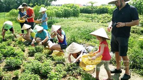 Liên kết để phát triển bền vững du lịch nông nghiệp