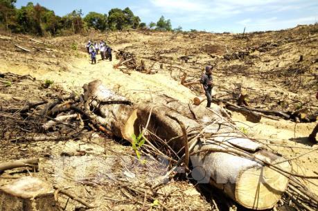 """Vụ phá rừng quy mô lớn tại Bình Định: """"Nhùng nhằng"""" trong xử lý trách nhiệm?"""