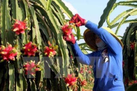 Cần Thơ hợp tác với Nhật Bản xây dựng nông trường kiểu mẫu