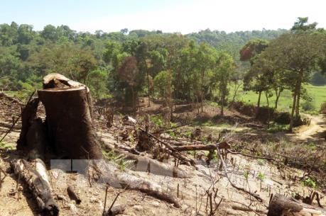 Đắk Nông: Kỷ luật cán bộ kiểm lâm để xảy ra phá rừng nguyên sinh