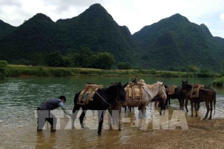 Vẻ đẹp mùa thu nơi biên giới Trùng Khánh, Cao Bằng