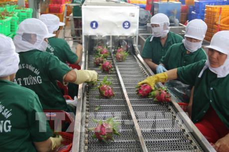 """""""Mở cửa"""" thị trường EU cho rau củ, quả tươi Việt Nam"""