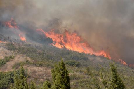Cháy rừng nghiêm trọng tại bang California