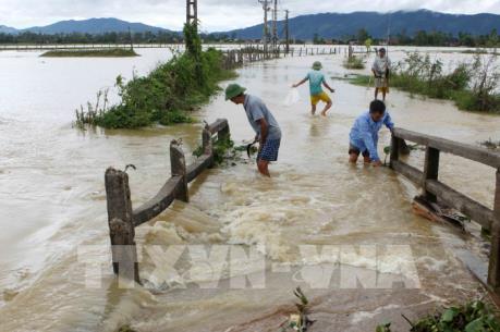 Hơn 14.000 ha lúa và hoa màu bị ngập, thiệt hại do mưa lũ