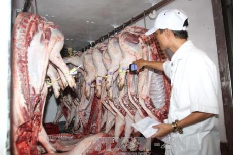 Lỗ hổng khâu trung gian về truy xuất nguồn gốc thịt lợn