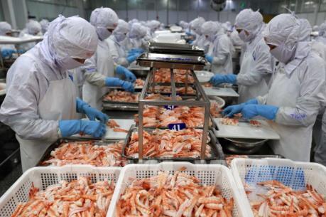 Tôm Việt tăng trưởng tại thị trường châu Âu