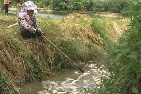 Cá chết nhiều dọc đập Hố Chuối chưa rõ nguyên nhân
