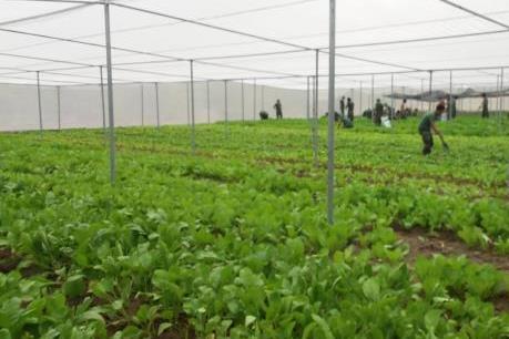Xúc tiến phát triển nông nghiệp công nghệ cao tại Hà Nội