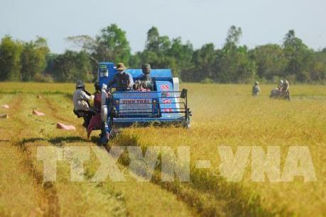 Sản xuất lúa gạo theo hướng bền vững – Bài 1: Còn nhiều cản lực