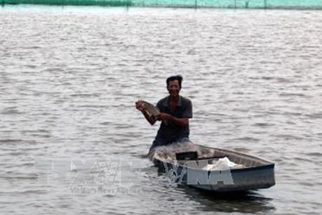 Khai thác tiềm năng kinh tế thủy sản mùa nước nổi thay cho làm lúa vụ 3