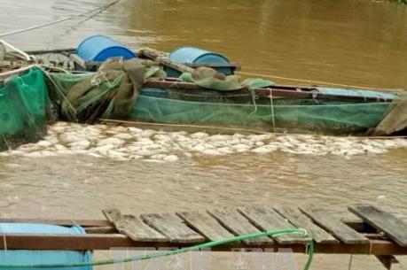 Đắk Nông: Hơn 200 tấn cá lồng bị chết do ảnh hưởng của bão số 12