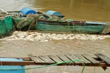 Ứng phó với bão Kai-Tak: Các tỉnh thành kiểm soát chặt chẽ tàu thuyền ra khơi