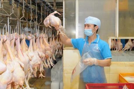 Mở thêm nhà máy chế biến để tăng lượng gà xuất khẩu sang Nhật Bản