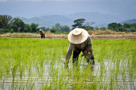 Thái Lan khuyến khích nông dân lùi thời điểm bán gạo