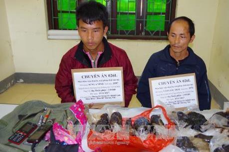 Điện Biên bắt giữ hai đối tượng mua bán, vận chuyển trái phép 4kg thuốc phiện