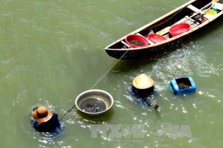 Phú Yên: Tự phát nuôi ốc cháy trong đầm Ô Loan