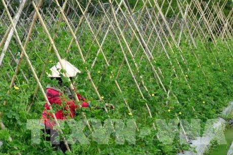Hội nghị đầu tư phát triển nông nghiệp tiểu vùng Đồng Tháp Mười theo hướng bền vững