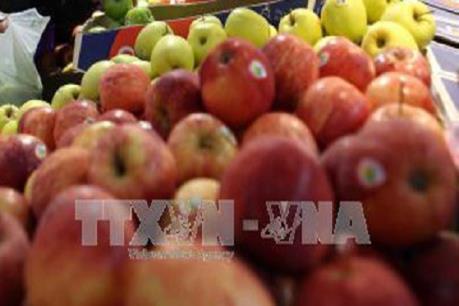 Cảnh báo về vấn đề rau quả sạch ở Thái Lan không an toàn