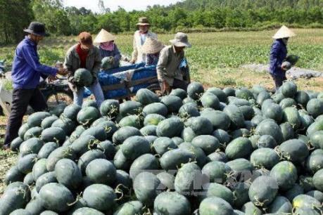 Doanh nghiệp Việt Nam - Trung Quốc ký kết hợp đồng thu mua dưa hấu năm 2018