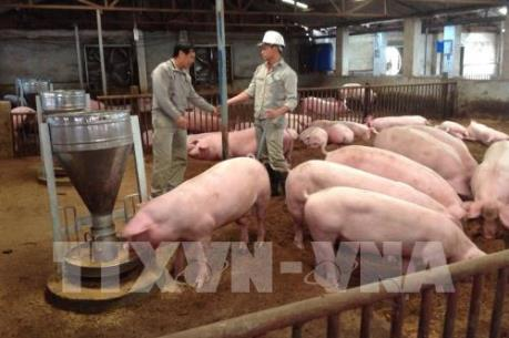 Lấy ý kiến doanh nghiệp về Luật Chăn nuôi (sửa đổi)