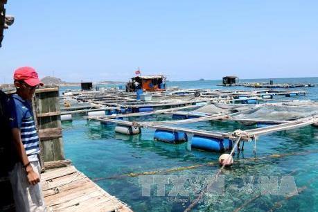 Xây dựng lại nghề nuôi trồng thủy sản bằng lồng bè trên các đầm và vịnh biển